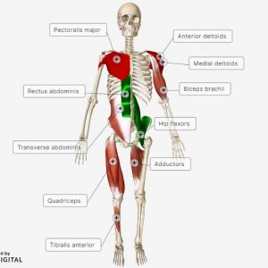 OSL Level 2 Exercise anatomy and physiology
